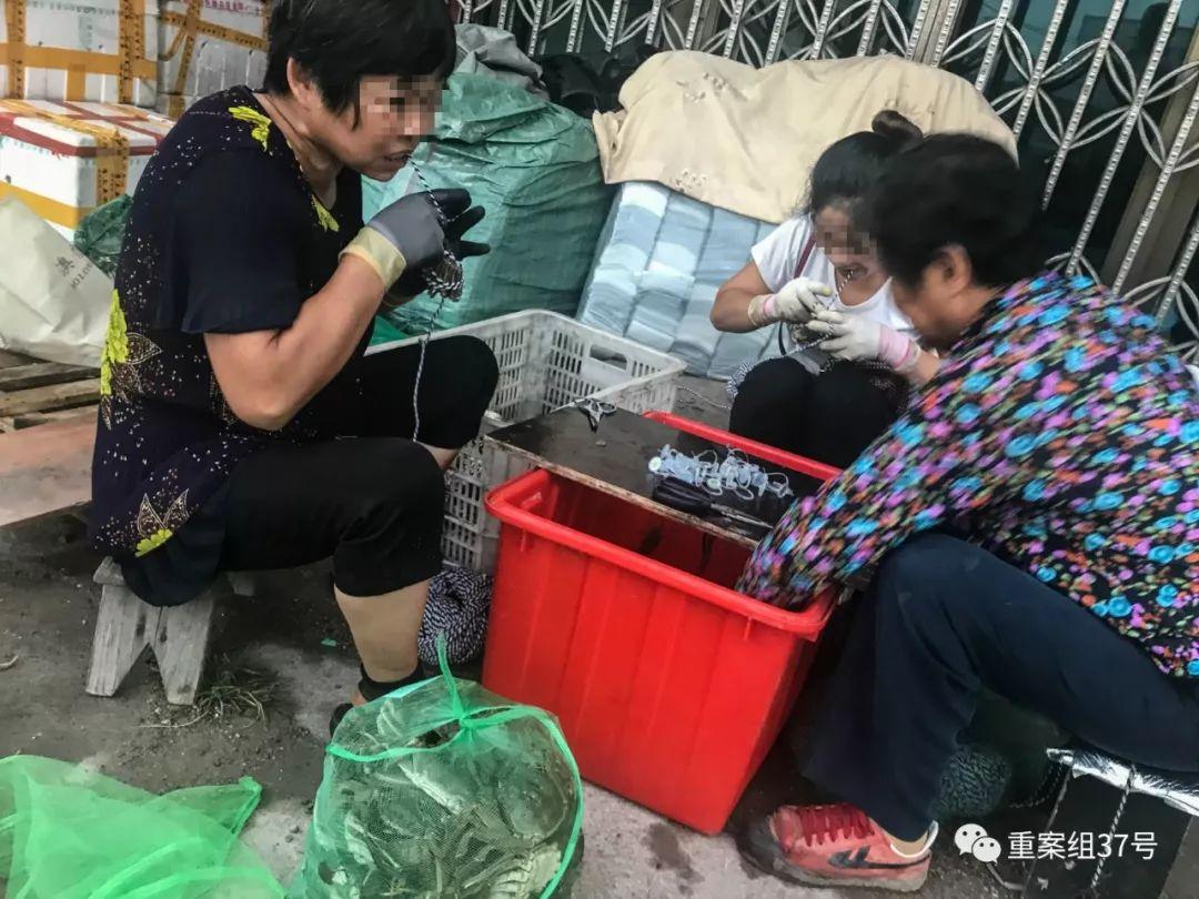"""阳澄湖""""贴标蟹"""":外地蟹价翻10倍 协会单位也造假"""