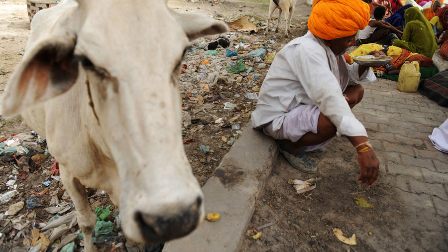 """印度拟建""""新型""""养老院:奶牛和老人一起生活共度晚年"""