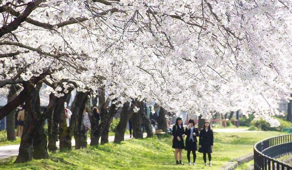 小众癖最爱的日本樱花线路:坐火车、看樱花、