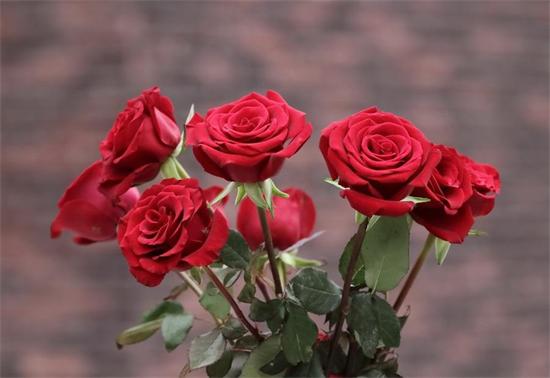 为什么夏天更需要敷珍珠玫瑰面膜
