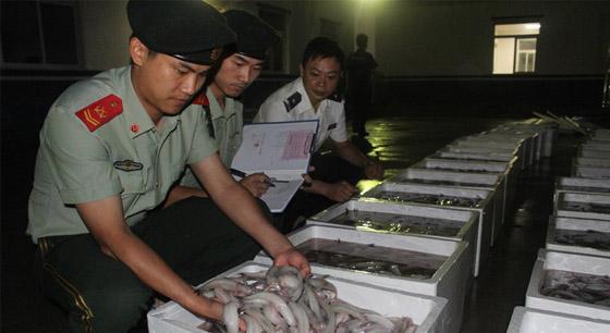 查获近4000斤豆腐鱼!禁渔期偷捕?抓的就是你!