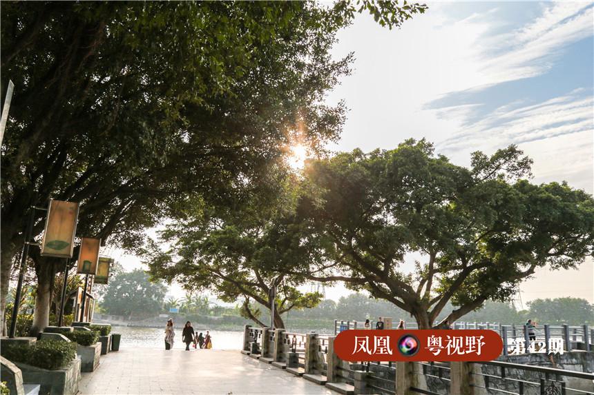 渡口旁的大榕树斜横,如今到此旅游的旅客,只见芭蕉林覆盖,渔船点点,已鲜见商贸的痕迹。