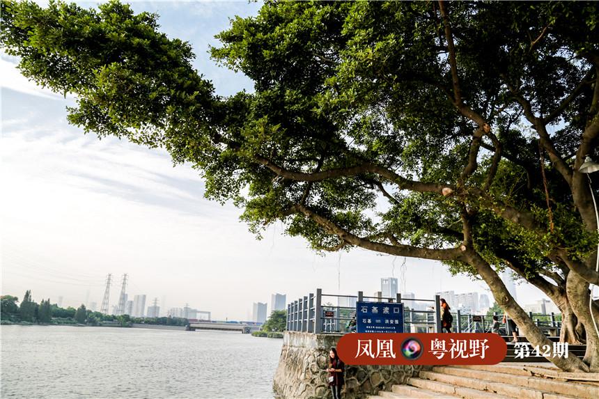 一个小村码头、大榕树下,从外国船舶上登岸的商贾人影绰绰......站在黄埔古港遗址旁,当年码头的繁荣景象从脑海掠过。