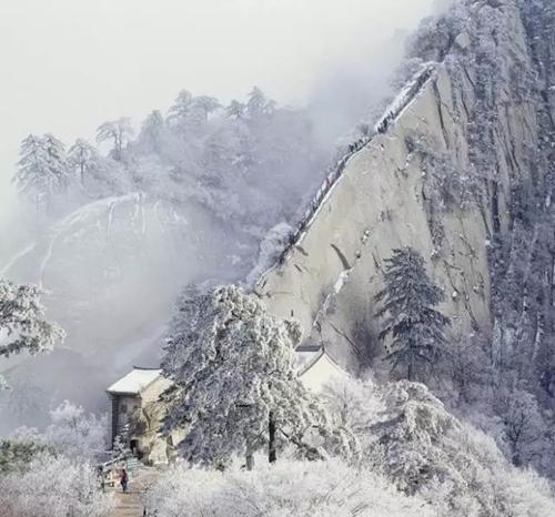 山崖为底,松桧为墨,一抹绚烂令人心颤,是登山的最佳季节; 秋季华山 冬图片