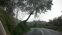 行车记录仪拍下树上骇人一幕