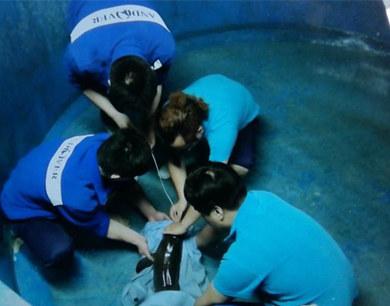 江豚幼崽搁浅 18小时救助未能挽回性命