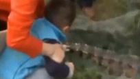 实拍男子江中钓出食人鳄 小孩伸手抚摸