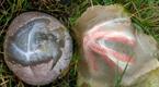 野外发现一些神奇的蛋 孵化的东西惊掉下巴