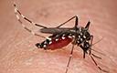 挠破蚊子包竟有生命危险 这种菌到处潜伏!