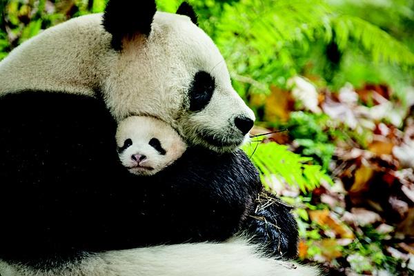 【星娱TV】陆川:《我们诞生在中国》在我心中是完美