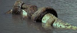罕见:巨蟒水底伏击大象 结果出人意料