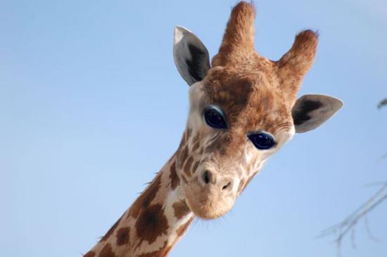脑洞大开:假如动物的眼睛都长在前面