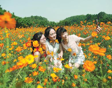 赣县阳埠乡百亩花田进入最佳观赏期(图)