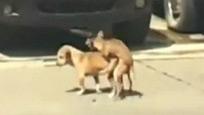二狗当街激情猝死 倒下瞬间让人哭笑不得