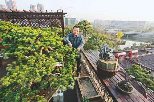 泰州市民打造楼顶盆景园