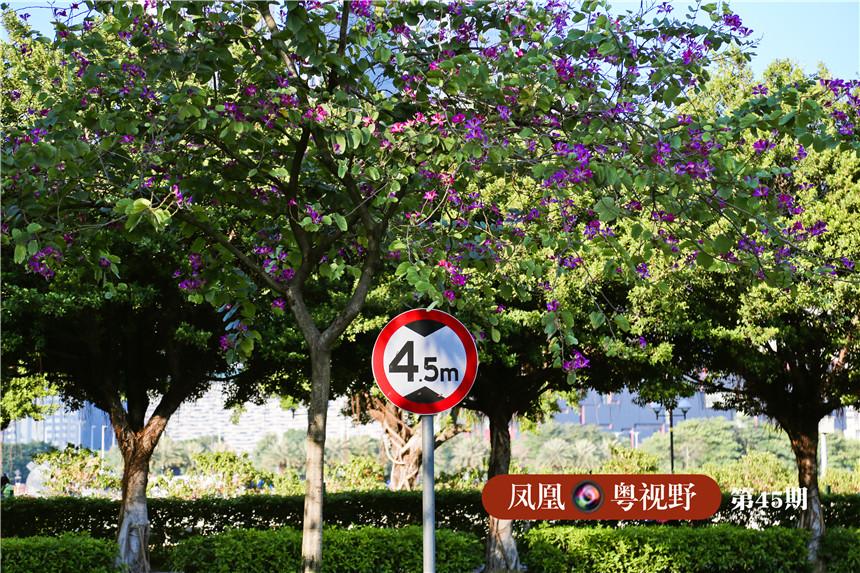 滨江路,沿路的紫荆与指示牌布局增添了道路景观的文艺气息。
