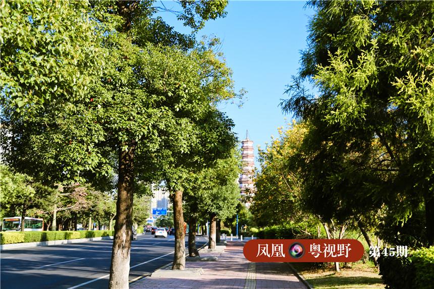 艺洲路沿线,到处绿意盎然,赤岗塔在树荫中若隐若现,让人心旷神怡。