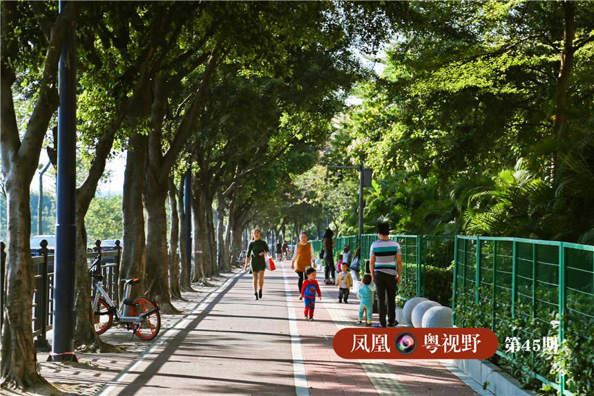 新滘路的人行道两旁改种乔木和草坪,加装防护栏。