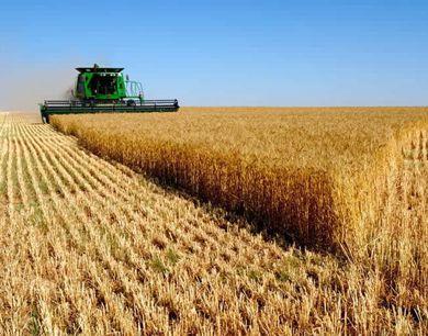 今年夏粮面积稳定在4.1亿亩
