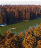 泰州兴化水上森林冬景美如画