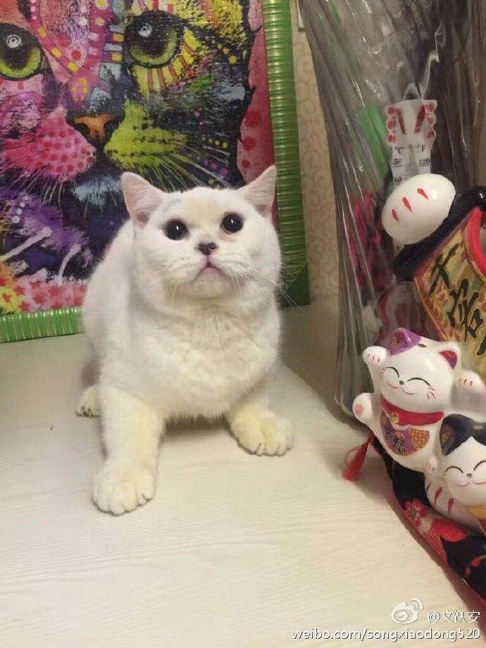 女子被指买猫后反悔 把小猫剥皮丢宠物店门口