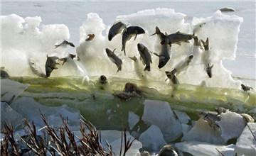 """湖鱼被冰封""""空中""""奇景"""