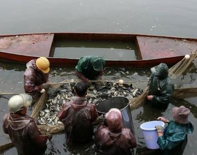 华南理工大学给师生发放校内打捞的鱼