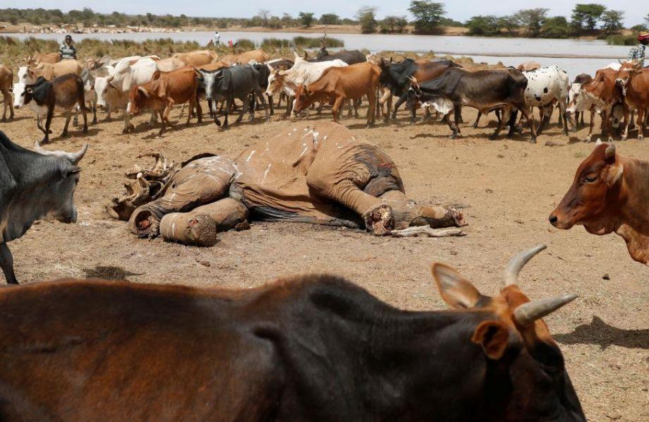 残忍杀大象 肯尼亚牧民与动物争夺水源 - 梅思特 - 你拥有很多,而我,只有你。。。