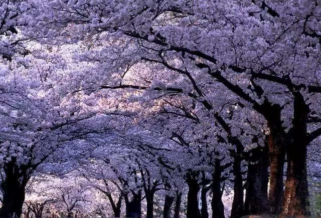 青岛中山公园参观路线