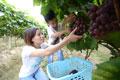 赣州市章贡区发展现代农业实现多赢