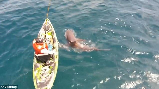 男子钓鱼时遭鲨鱼袭击瞬间