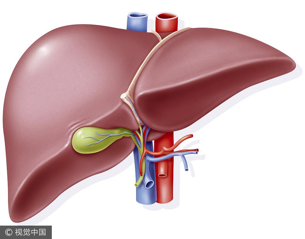 肝癌常见症状有? 详解肝癌七个典型症状