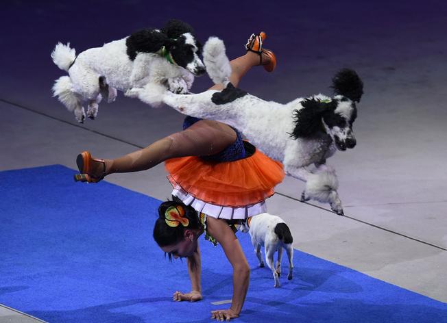 虐待动物,看客稀少,美国老马戏团结束146年表演