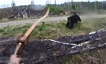 猎人拉弓瞄准时,黑熊扑了过来