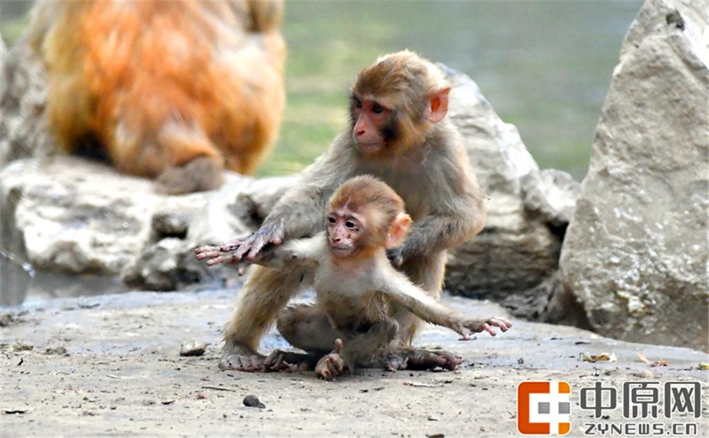 萌萌哒:郑州动物园的快乐时光!