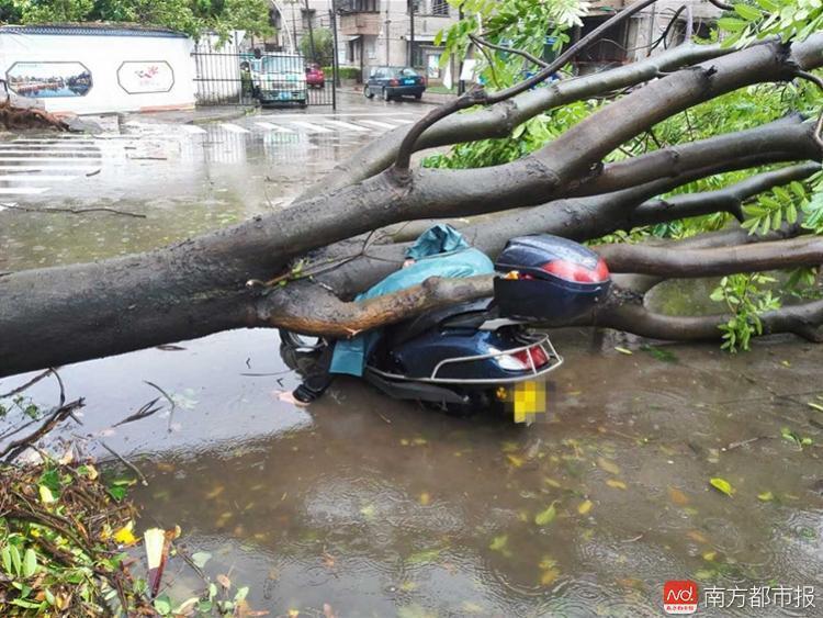 中山女子台风天被树砸死