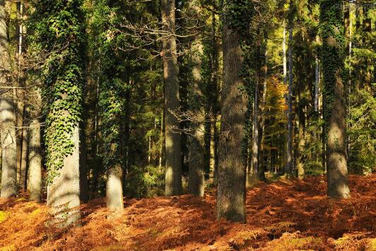 大自然地板:如何避免选购橡木地板的5大误区
