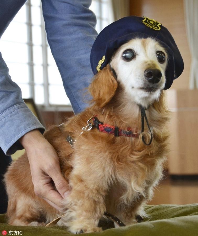 日本17岁大龄狗狗助主人抓获窃贼