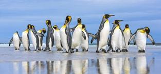 帝企鹅组团看日出
