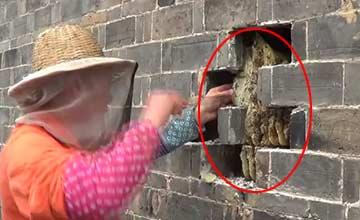 蜂农发现墙壁有异常 看到最后一幕都竖起了大拇指