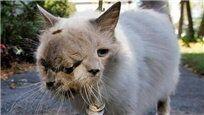 吓人!日本核辐射 动植物畸变出现双头猫