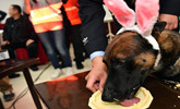 """民警为""""兄弟""""办生日会 警犬集体卖萌吃蛋糕"""