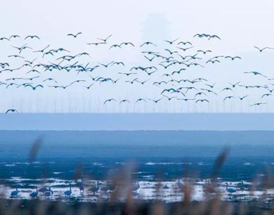 飞鸟、荻花、草原……这里是江西的仙境王国