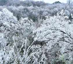 天门山迎今冬首场雾凇
