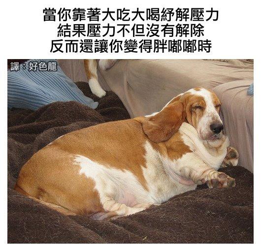 fun来了:养狗可以长寿|善良限制了你的想象力图片
