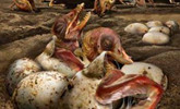 新疆发现数百枚3D翼龙蛋与胚胎化石