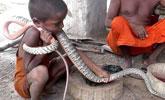 印度村庄眼镜蛇成幼童宠物 毒蛇陪伴孩子长大