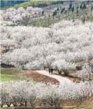 徐州圣人窝花团锦簇 尽显美丽山村