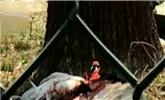 动物园丹顶鹤被饲养员殴打出血 园方回应:系自卫误伤