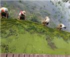 商丘:河道保潔人員及時清理打撈水草、保護水質